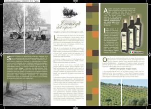 Brochure retro Olearia musa-2